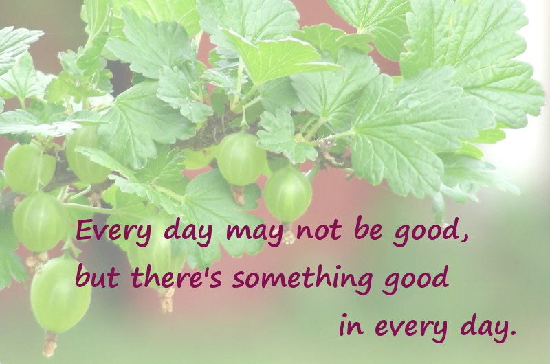 everyday good