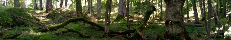 lenholmen metsä