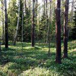 Kevätelämyksiä ja hyvinvointia Helsingin Keskuspuistosta